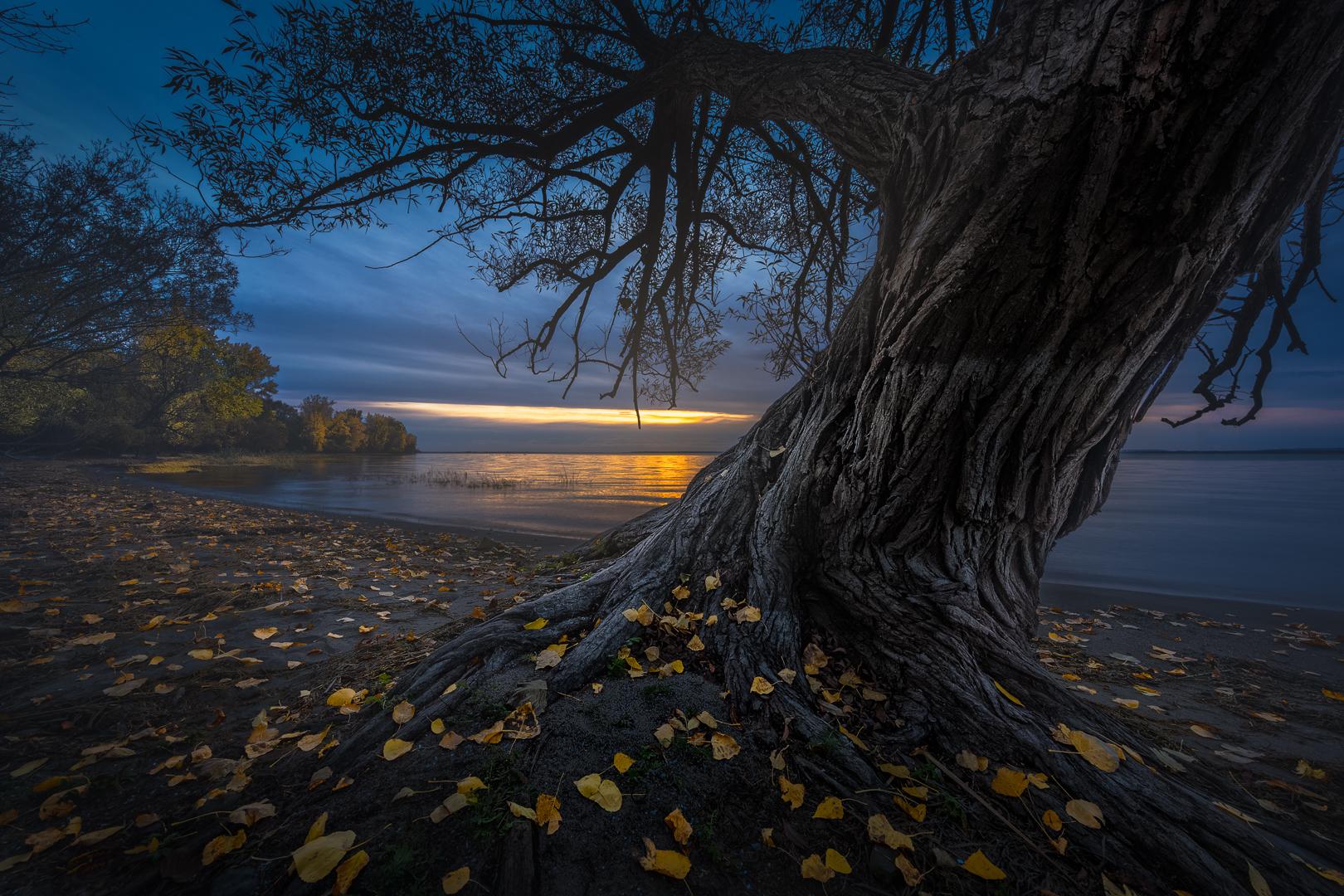 L'arbre est dans ses feuilles