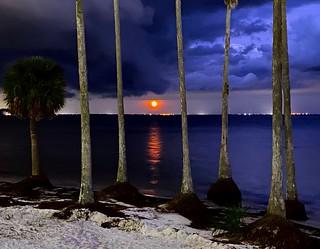 Moonrise through Palm Trees on Tampa Bay, Florida