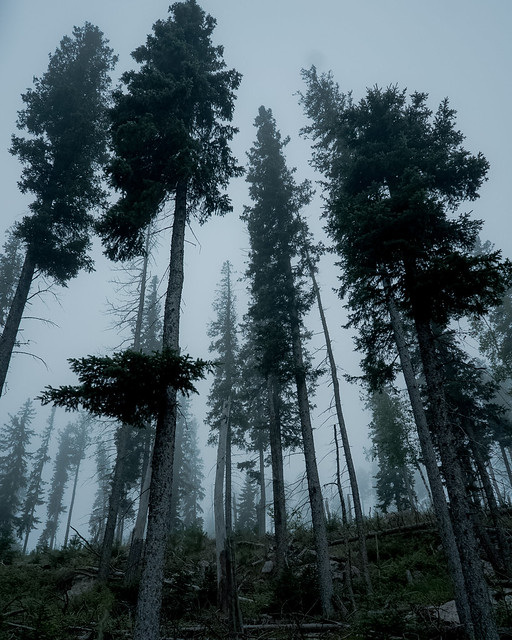 Foggy evening in the woods