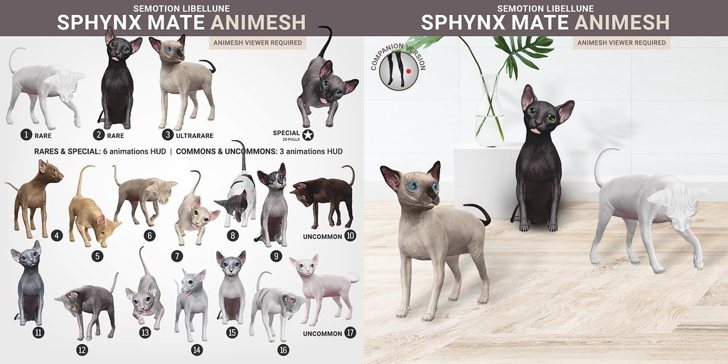 SEmotion Libellune Sphynx Cat Mate Animesh