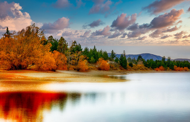 The beautiful Autumn hues and vibrant colours of the willow trees on the  shore of the Lake