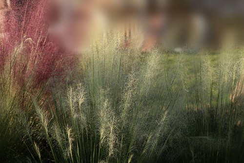 Some grasses along the river...(Explored)