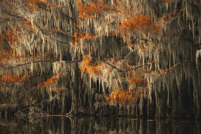 Fall Colors at Caddo