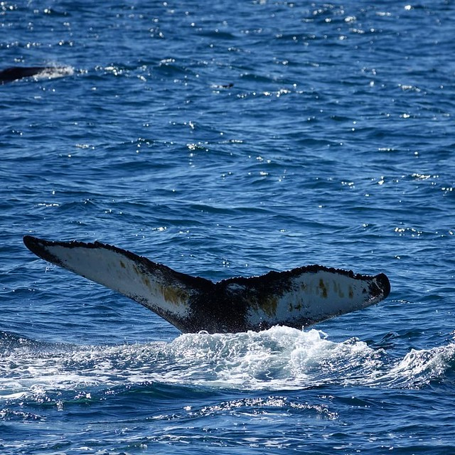 Find the Best Places to See the Whale Watching in Iceland