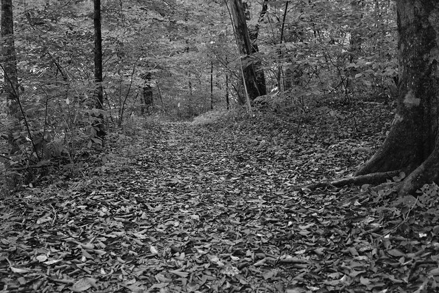 When I Look at the Trees, I See Intricate Patterns and Colors of Wildness (Black & White, Mammoth Cave National Park)