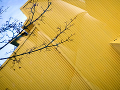 Yellow building clad in corrugated metal with black branches on Granville Island in Vancouver, Canada