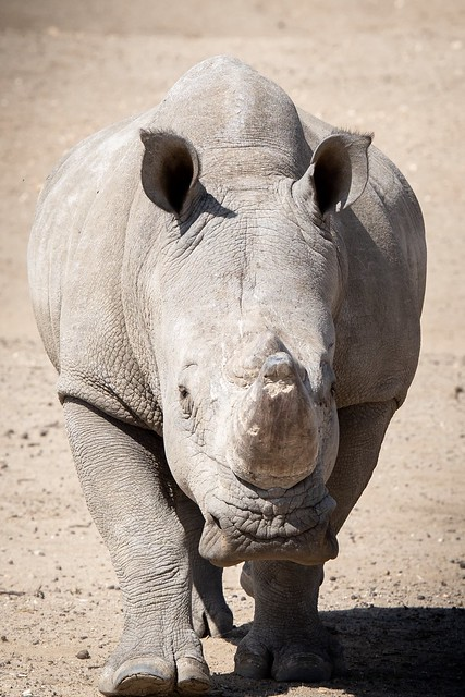 Happy Rhino
