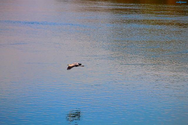 ombre sull'acqua