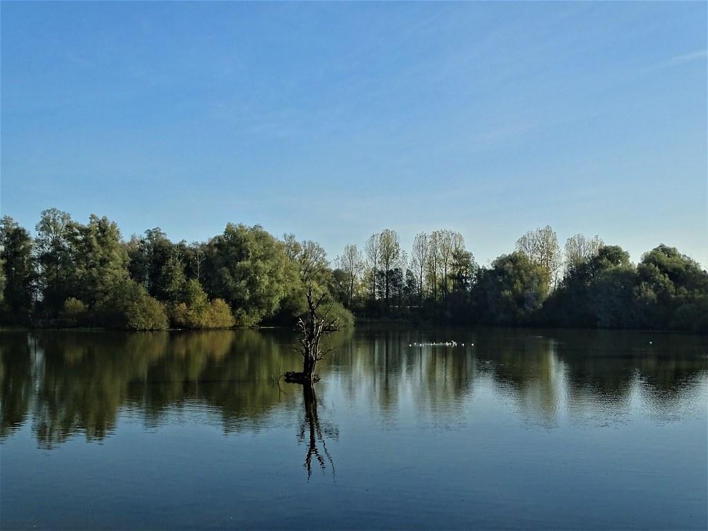 Reflets dans les étangs des ballastières à Aire sur la Lys.
