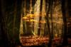 Mystical autumn forest by thorvonassgard