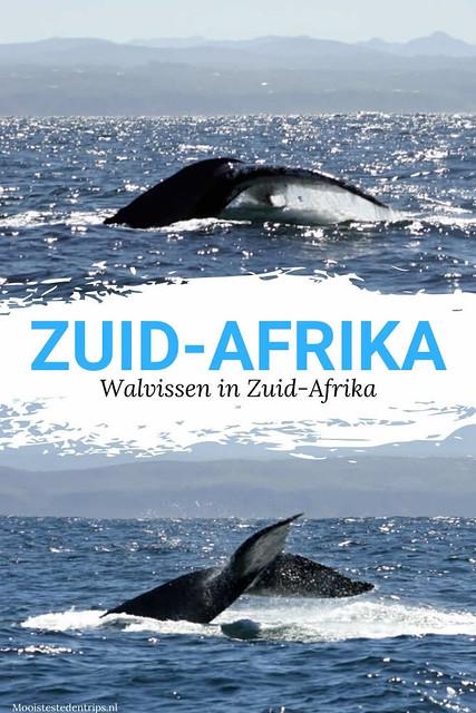 Walvissen in Zuid-Afrika: hier kun je zien! Bekijk de mooiste plekken om walvissen in Zuid-Afrika te spotten