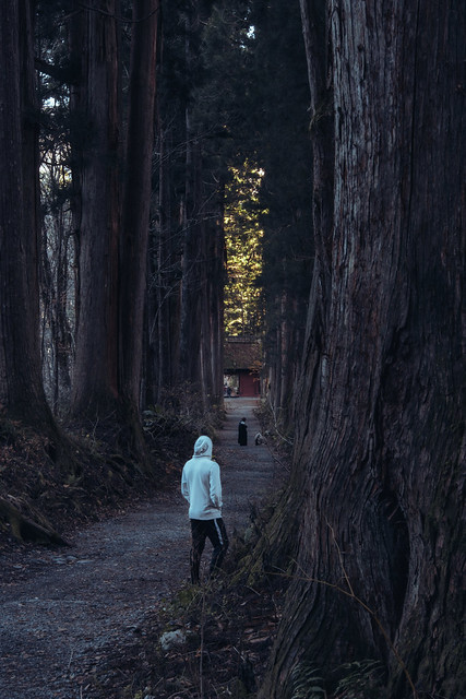 Togakushi forest shrine