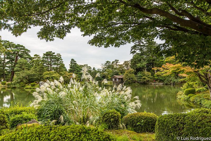 Arces, cerezos, pampas... vegetación variada en los jardines Kenrokuen de Kanazawa