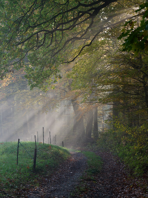 The fairy of light