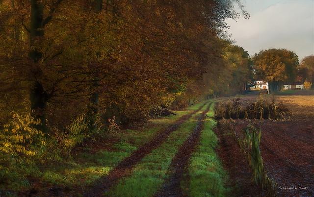 Herbstfarben - Feldweg