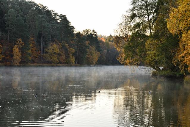 L'étang de Hasselfurth au petit matin