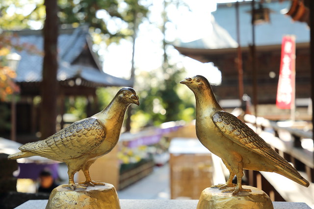 The metallic pigeons staying in the shrine