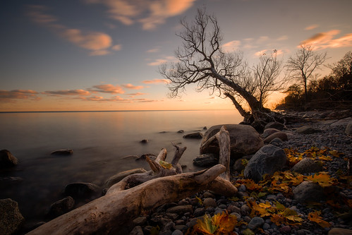 autumn fall shore lake sunset tree drift wood leaves water clouds longexposure beach rocks ontario canada pickering