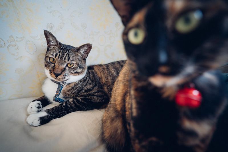 喵喵們|Cats