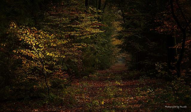 Herbstfarben - Licht