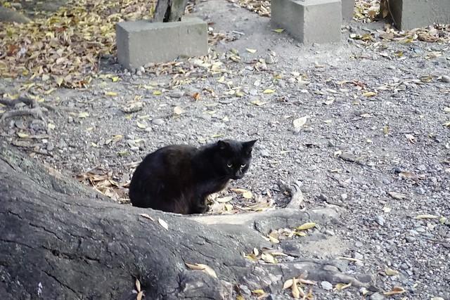Today's Cat@2019-11-13