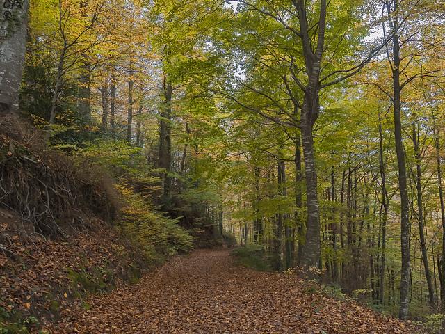 Trepitjant fulles / Pisando hojas