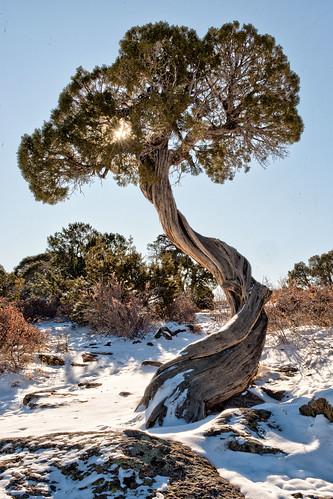 colorado blackcanyonofthegunnison tree