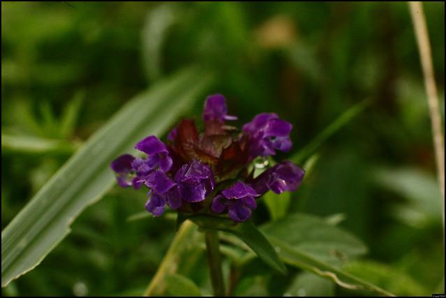 Fleur - 317/365