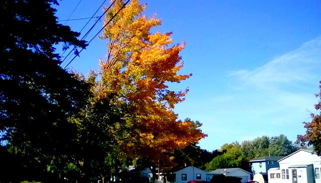 Autumn tree - TMT Menominee Michigan