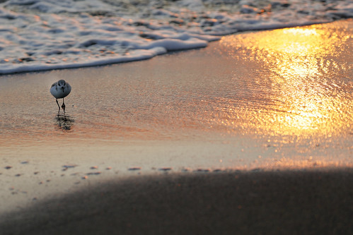 beach sunset reflections bird light goldenhour