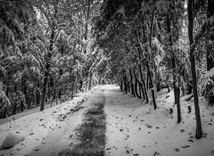 20191113 Pen Glen Snow! - Al Susinskas-5