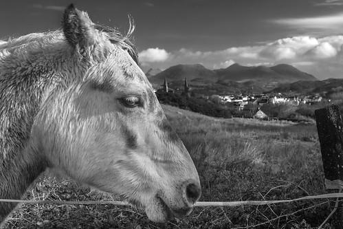 clifden galway connemara ireland wildatlanticway horse head farm agriculture mountains sky field countryside peaceful rural