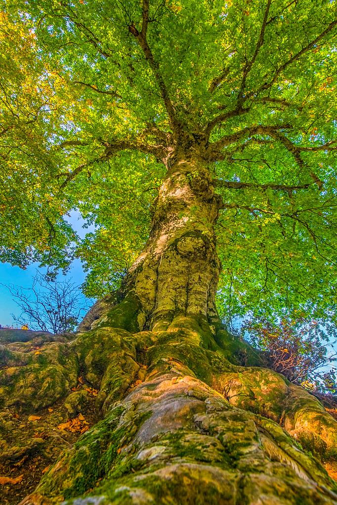 Il fascino di un albero