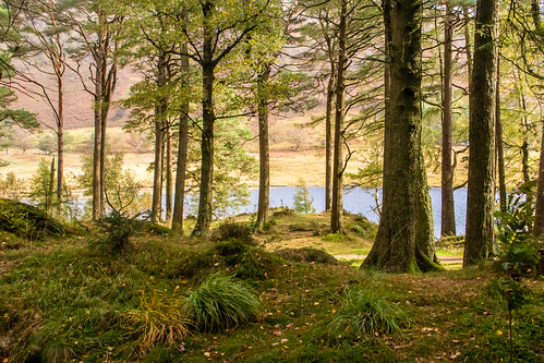 landscape view vista bleatarn lake water tree woodland forest langdales mountain trunk foliage lakedistrict nationalpark cumbria hdr nationaltrust