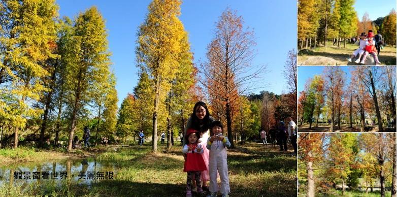 taian_tree
