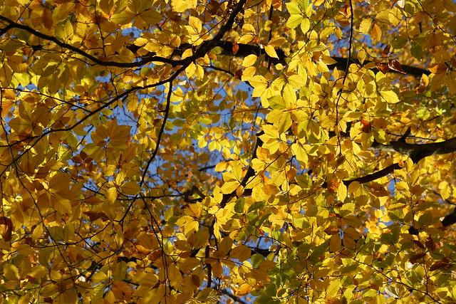 autumn morning fullness