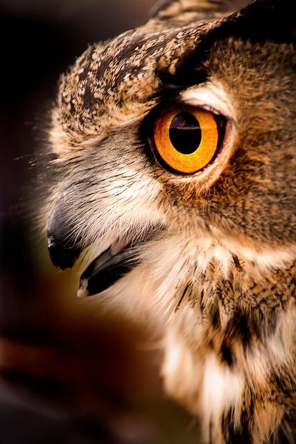 Owl Profile 3-0 F LR 11-10-19 J187