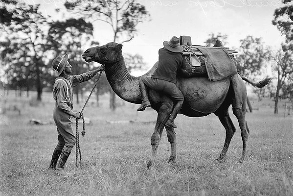 Army_Camel_Corp_training