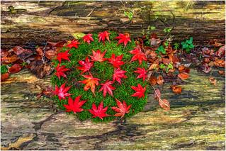 rote Blätter auf Moos