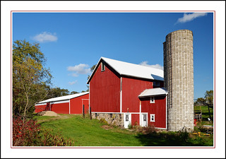 Michigan Red Barns and a Tall Silo