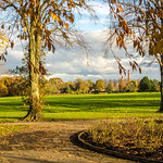 Autumn in Haslam Park