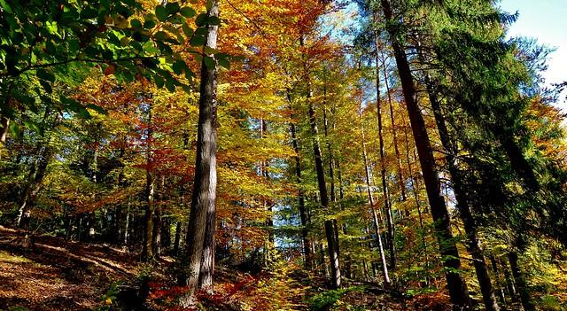 GERMANY, Im Herbst im Siebenmühlental bei Stuttgart, 76799/12093