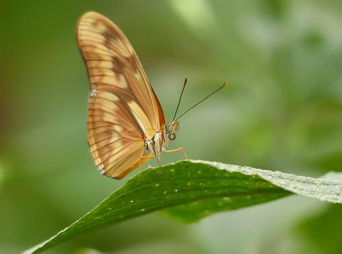 serie mariposas