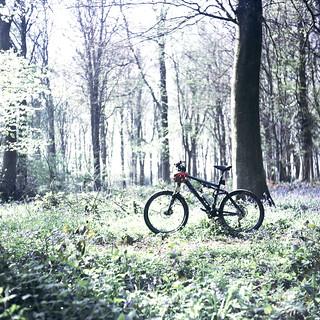 a Bike in the woods...
