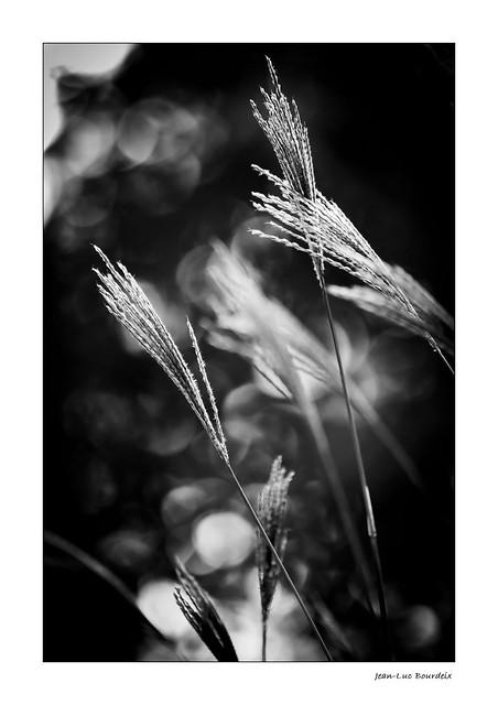 Folles herbes