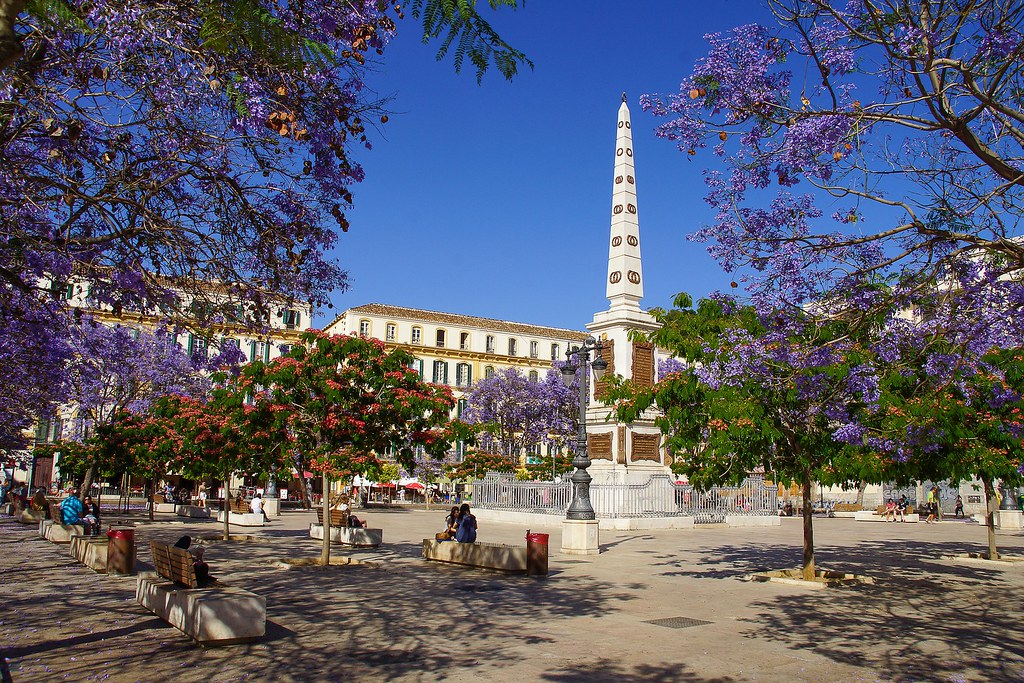 Plaza de la Merced in spring, with a lot of jacaranda trees in full bloom, with purple flowers