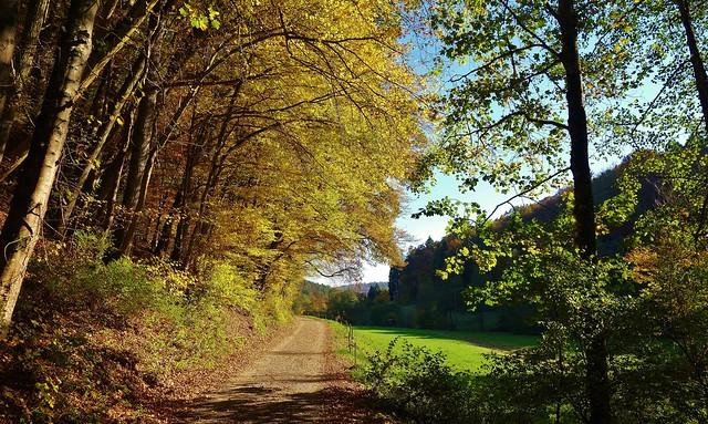 GERMANY, Im Herbst im Siebenmühlental bei Stuttgart, 76802/12096