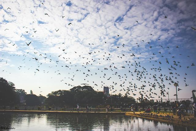 Freedom  #freedom #birds #blueskies #serenity