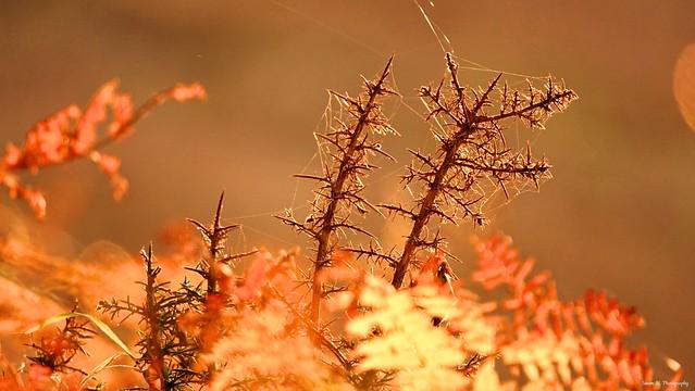 Close-up on Autumn. Nov 2019