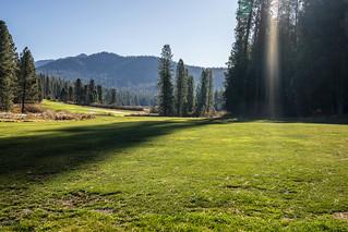 Sunlight on meadow